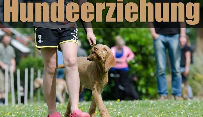 Hundeerziehung – The Easy Way